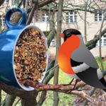 Vogelfutter aus der Tasse